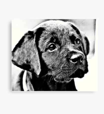 Urwin The Guide Dog Canvas Print