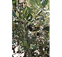 Olives  Photographic Print