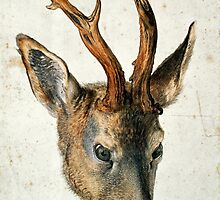 Albrecht Durer, (– ), HEAD OF A ROE DEER.  by Adam Asar