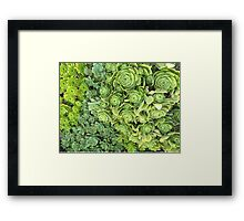 Succulent Plants at St Michael's Mount, Cornwall Framed Print