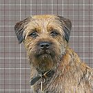 Border Terrier Dog On a Brown And Cream Background by Moonlake