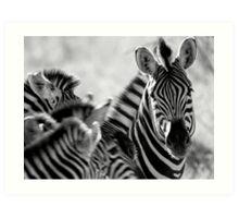 Zebra print, monochrome Art Print