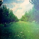 Apple Orchard in Spring by Olivia Joy StClaire