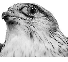 Suspicious Falcon - Monitor Distortion by Obskibibsky