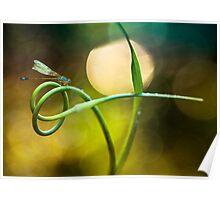Blue Dragonfly sitting on garlic plant Poster