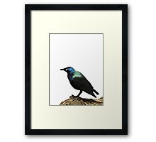 shiny bird sticker Framed Print