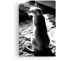 black&white singapura cat 1 Canvas Print