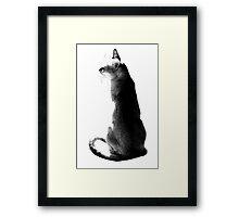black&white singapura cat 2 Framed Print