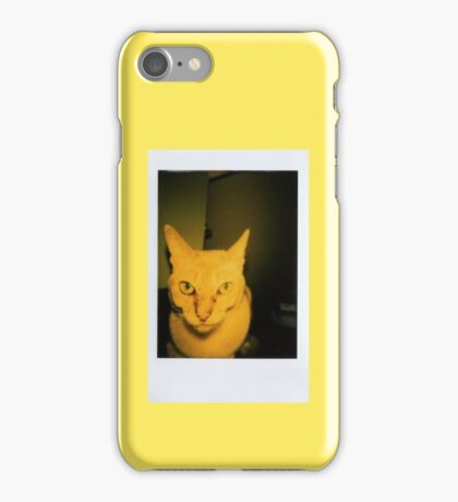 polaroid picture of singapura cat iPhone Case/Skin