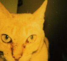 polaroid picture of singapura cat Sticker