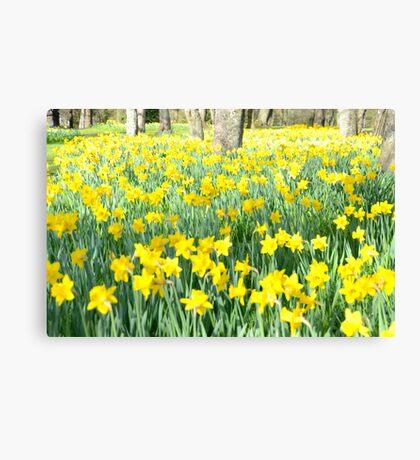 Daffodil wood Canvas Print