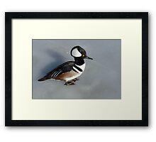 Hooded Merganser Duck Drake Framed Print