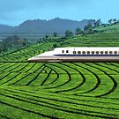 Shinkansen line in Green Tea Meadows, near Kyoto, Japan by Bruno Beach