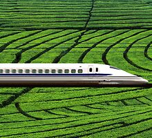 Shinkansen in Green Tea Meadows, near Kyoto, Japan by Atanas NASKO