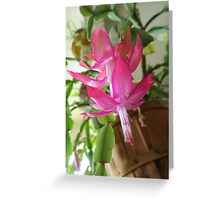 Christmas Cactus In Janurary...as is Greeting Card
