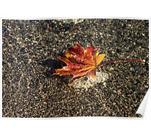 Gently Floating Autumn - Multicoloured Maple Leaf in the Lake Poster