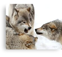 Opinionated  Canvas Print