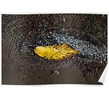 Submerged Beauty - Sunny Ripples on a Multicolored Cherry Leaf Poster