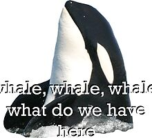 Whale Whale Whale... Sticker by emrapper