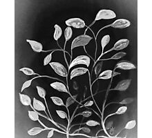 Red and Green Leaves! Monochrome Black and White and Grey Photographic Print
