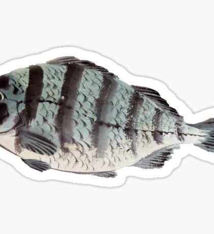Vintage Japanese Striped Bass Sticker