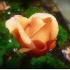 *Julia's Rose - Beauty opening to Life* by EdsMum