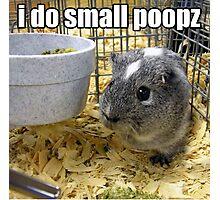 lolz Poopz Hamster Photographic Print