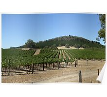 Manicured Vineyard high in the hills, Mount Crawford. S.Aust. Poster