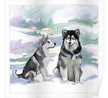 Alaskan Malamutes Poster