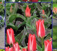 Keukenhof Collage featuring Pinocchio Tulips Sticker