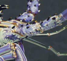 Caribbean Spiny Lobster Sticker