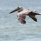 Pelican Flight by Bob Hardy