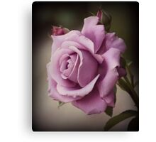 Pink Rose - Digitally Altered Photography Canvas Print