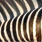 Stripes!! by jozi1