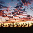 Coonawarra Sunset by Jason Langer