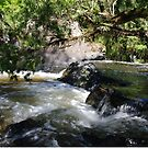 Creekscape by Liz Worth
