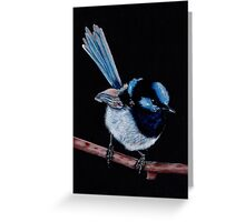 Superb Fairy Wren in Coloured Pencil Greeting Card
