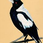 Australian Magpie in Coloured Pencil by Diane McWhirter