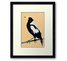 Australian Magpie in Coloured Pencil Framed Print