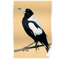 Australian Magpie in Coloured Pencil Poster