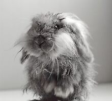 Soggy cute baby bunny rabbit by Raitt