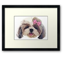 CUTE SHITZU DOG Framed Print