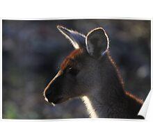 Mt. Lofty Kangaroos Pt.3 Poster