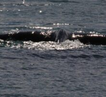 Victor Harbor Southern Right Whales Pt.5 Sticker