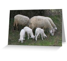 The Really Ewesful Company Greeting Card