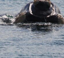Victor Harbor Southern Right Whales Pt.6 Sticker