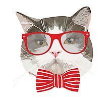 Fat Cat with Glasses Photographic Print
