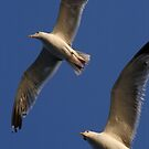 Seagulls In Flight by taiche