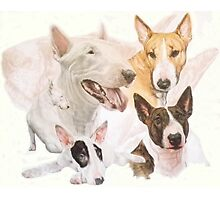 Bull Terrier /Ghost Photographic Print
