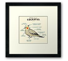 Anatomy of a Cockatiel Framed Print